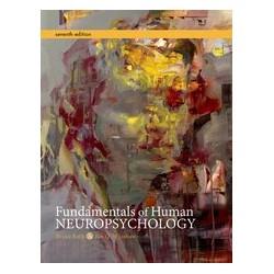 Fundamentals of Human Neuropsychology