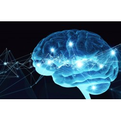 Neuroscience, Learning and Memory